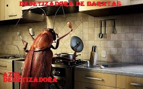 Dedetizadora na Vila Haddad(11)3921-8778 Orçamento gratis