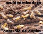 Dedetizadora Descupinizadora na Vila Beatriz(11)3921-8778 Orçamento grátis