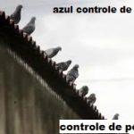 controle de pombo