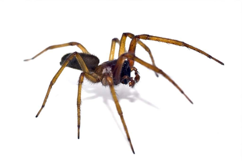 dedetizadora dedetizacao aranhas