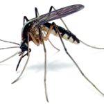 dedetizadora de mosca