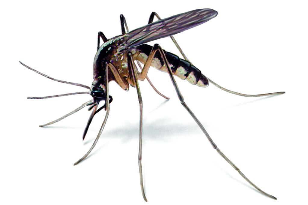 dedetizadora dedetizacao mosquitos